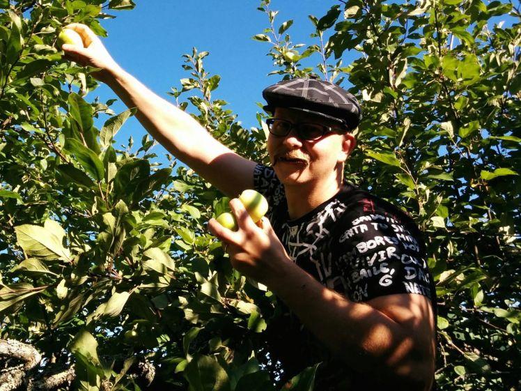 omenapuussa4_web